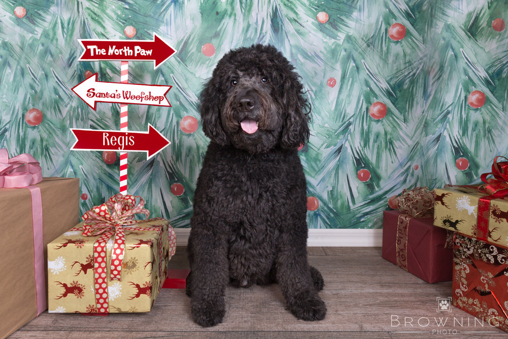 dog-days-of-christmas-2
