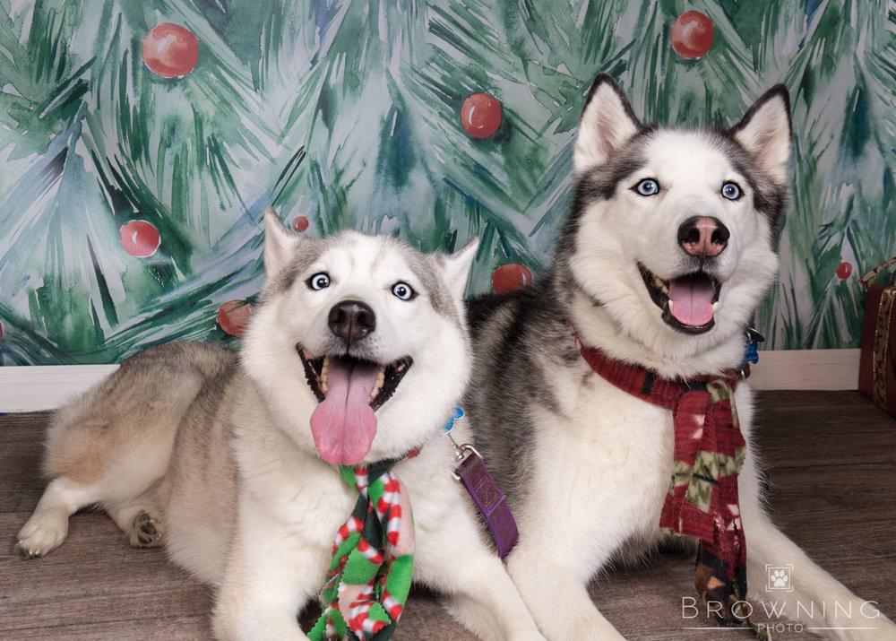 dog-days-of-christmas-3