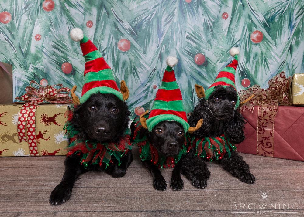 dog-days-of-christmas-4