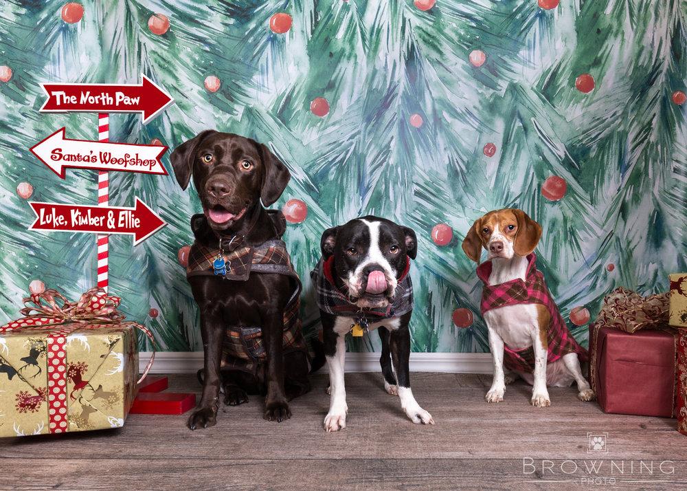 dog-days-of-christmas-5