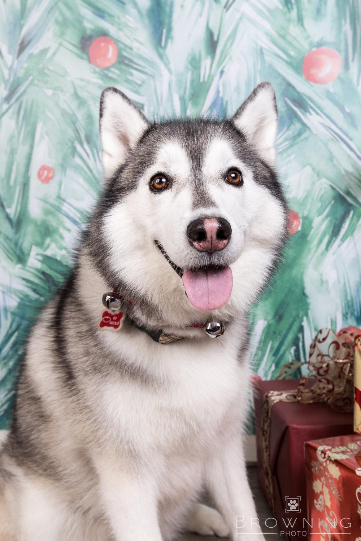 dog-days-of-christmas-6