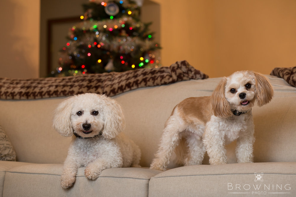 christmas-dogs-at-home-2