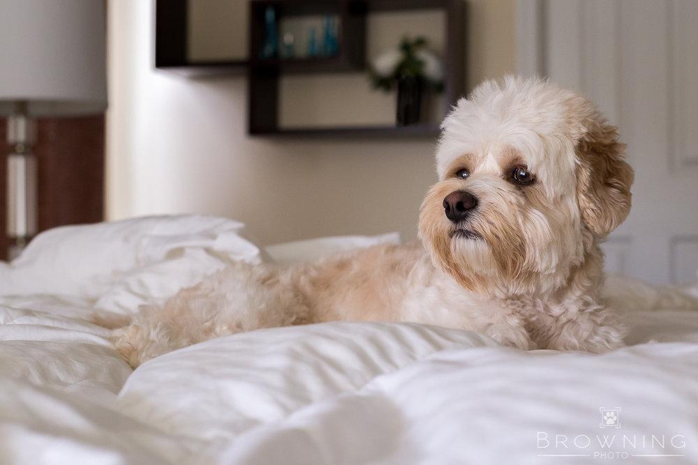 columbus ohio dog photography indoor