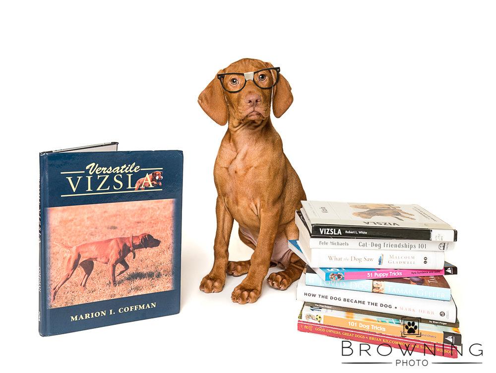 dog eyeglasses columbus ohio