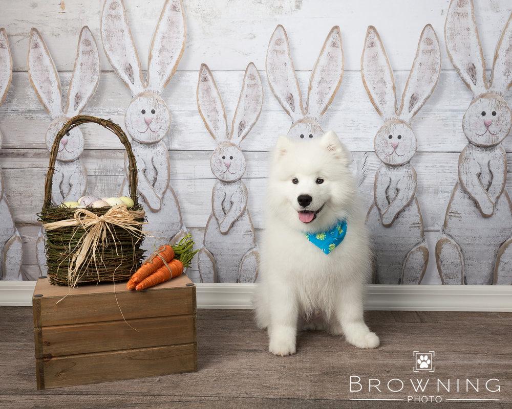 Easter pet photos 3