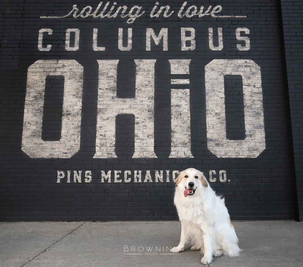 dog photography columbus ohio