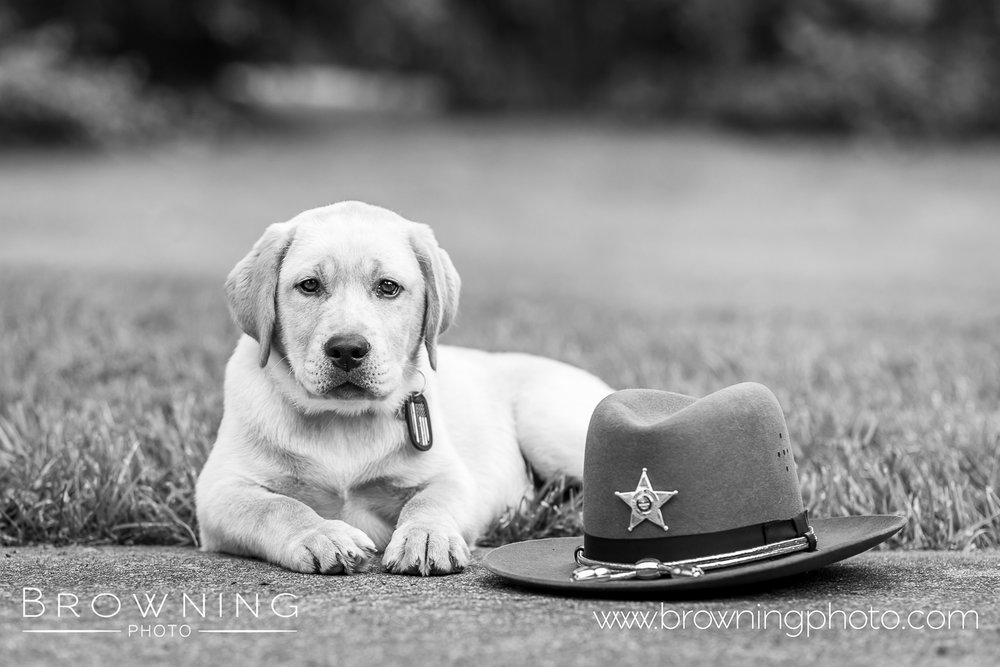 dog photography columbus ohio