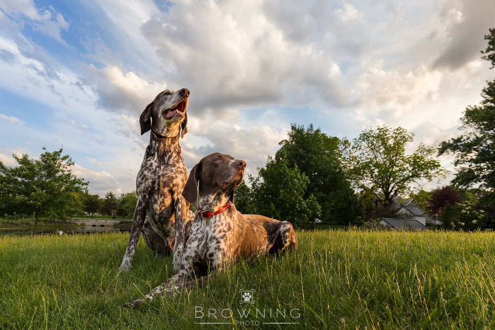 Big-sky-dog-photography-2