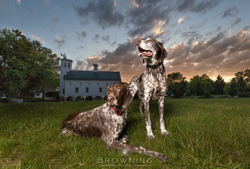 Big-sky-dog-photography-3