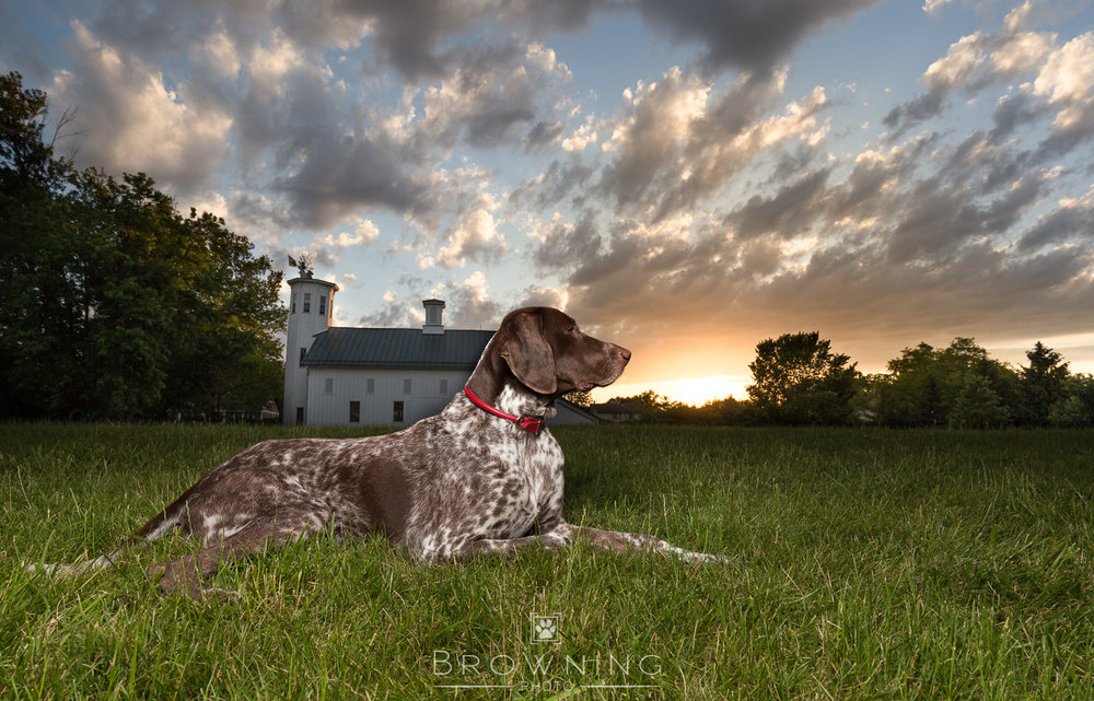 Big-sky-dog-photography-4