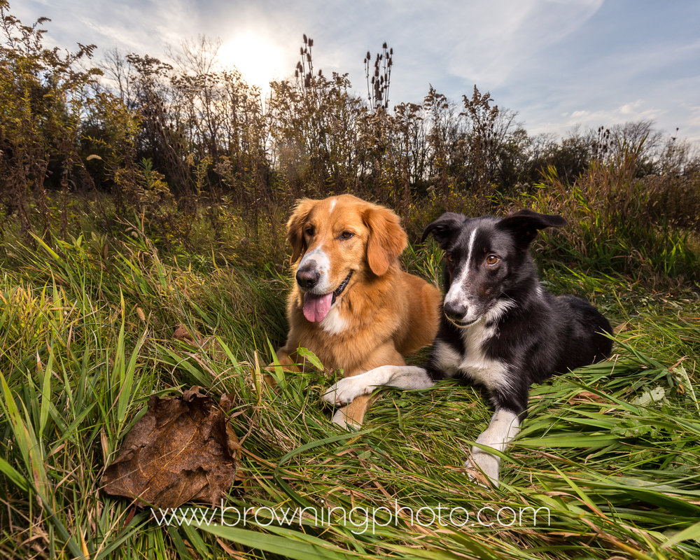 hilliard-dog-photography-4