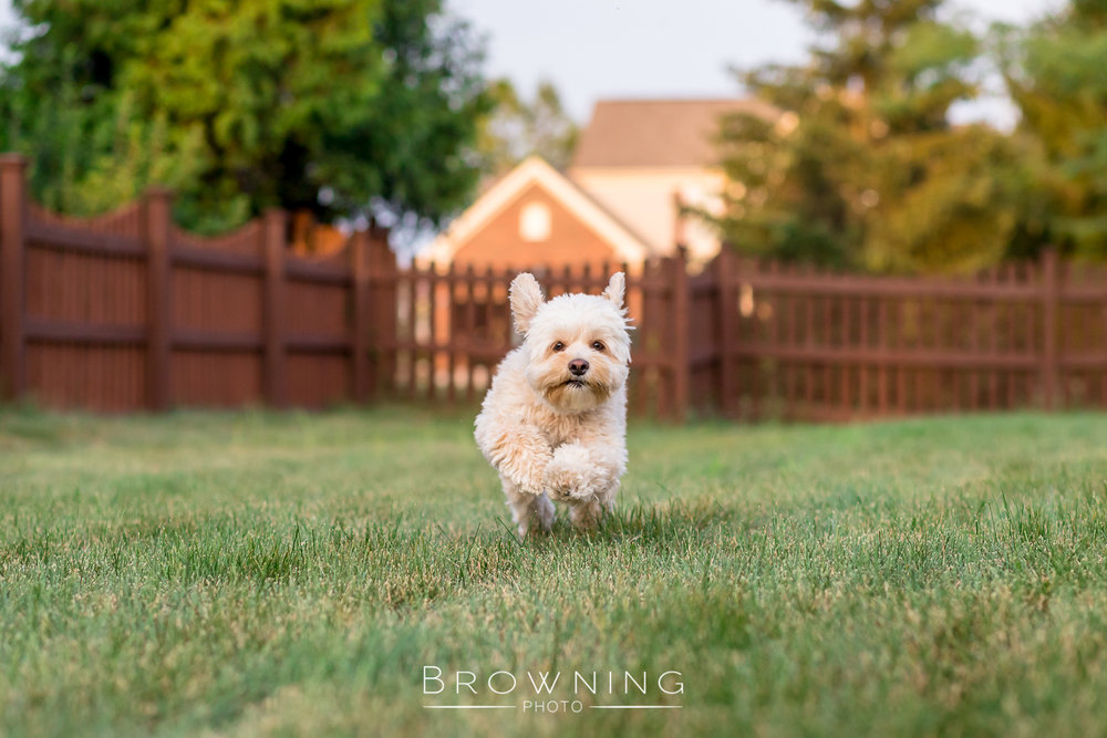backyard-running-action-shots-1