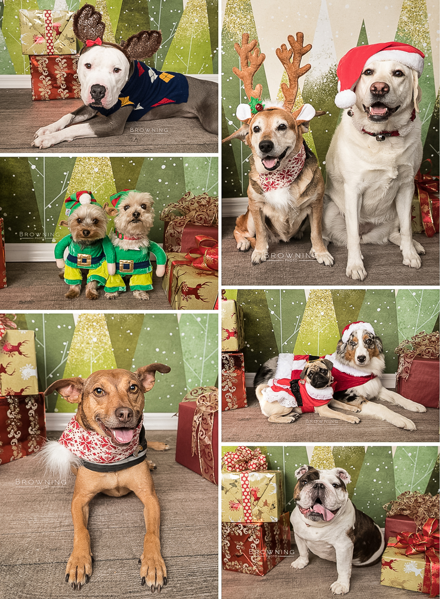 petpeople holiday portraits