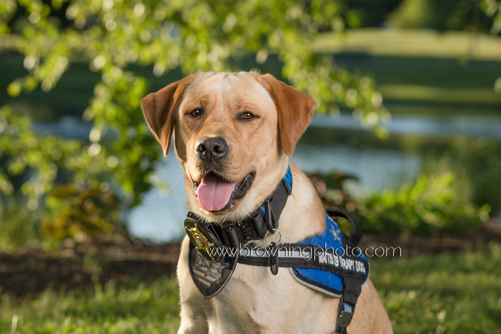 deputy-mattis-franklin-county-therapy-dog-1
