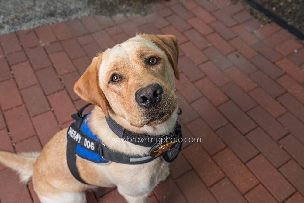 deputy-mattis-franklin-county-therapy-dog-3