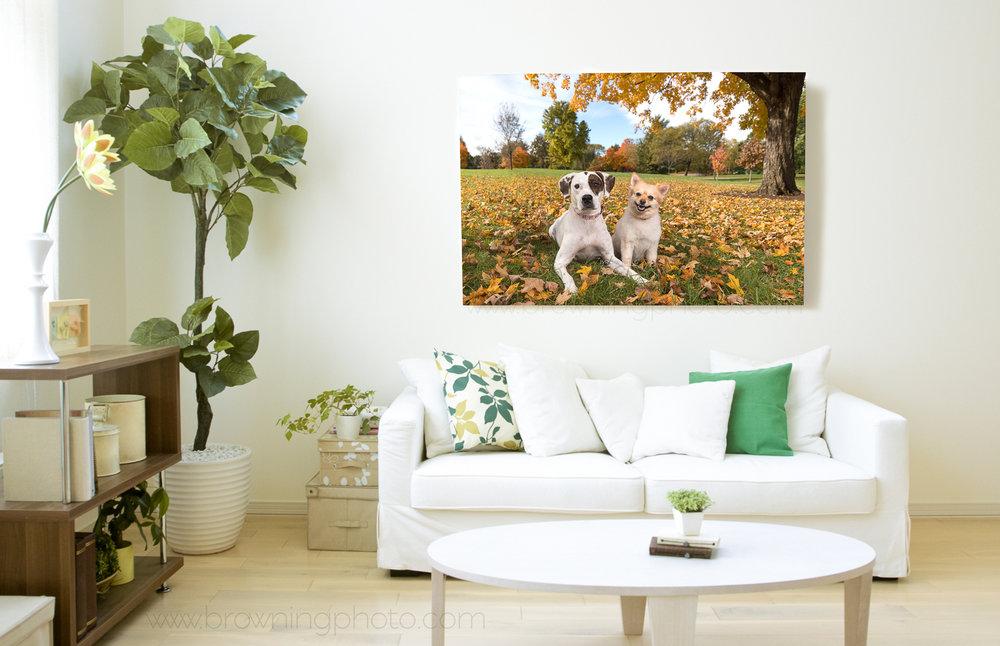 dog living room.jpg