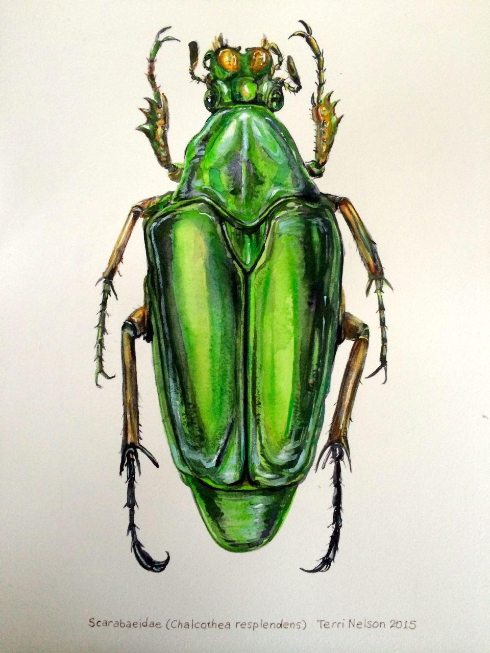 "Scarab Beetle (watercolor, 10""x14"") by Terri Nelson"