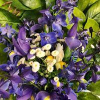 Iris Arrange.jpg