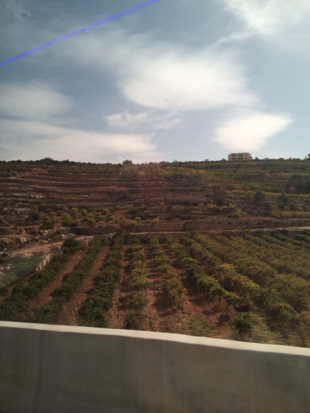 A West Bank hillside orchard