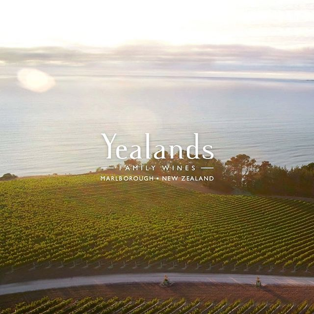 Kicking off an exciting project with @yealands who fun fact, are world leaders in sustainable wine growing! The only thing better than a glass of wine is a sustainable glass of wine 🌏🍇🍷⠀ ⠀ #winery #vineyards #yealands #ecommerce #retail #shopify #web #development #digital #strategy #agency