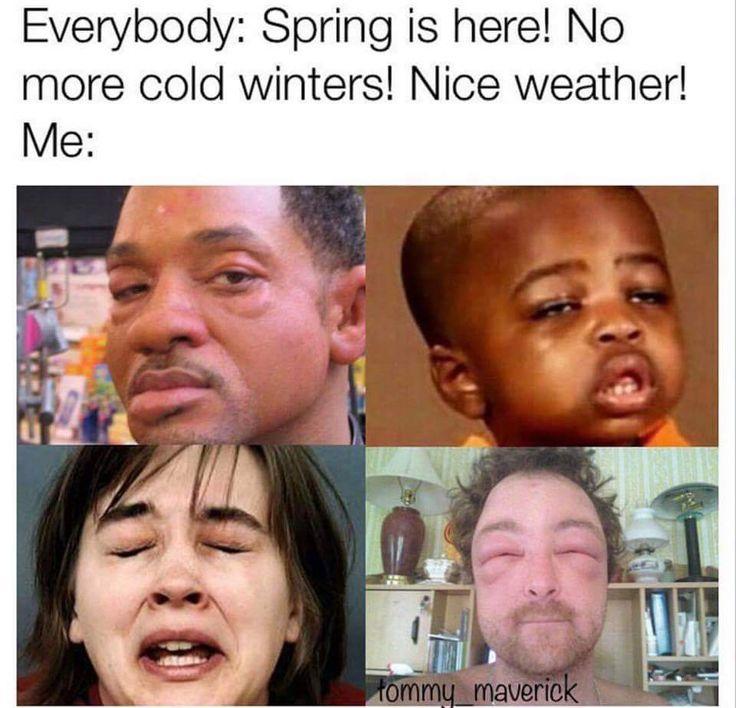 037e4b4ef55e43bfd846852329822716--allergies-meme-spring-allergies-humor.jpg