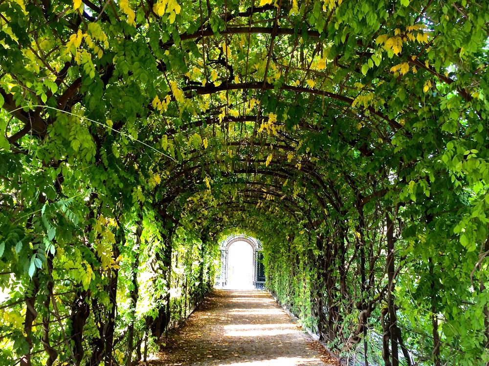 Walk through these vines. I implore you.