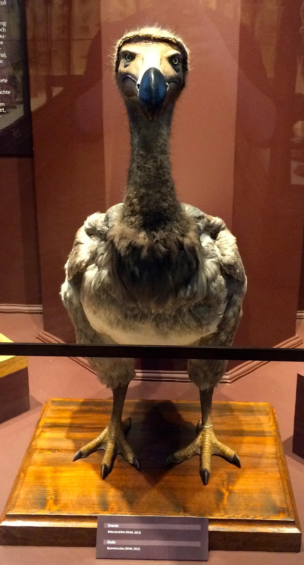 The Dodo: Poster Child For Extinct Animals.