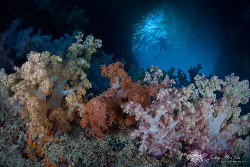 "Palau Underwater is a ""National Geographic"" quality experience, every day!"