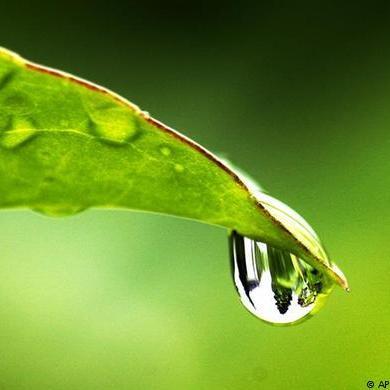 raindrop off leaf