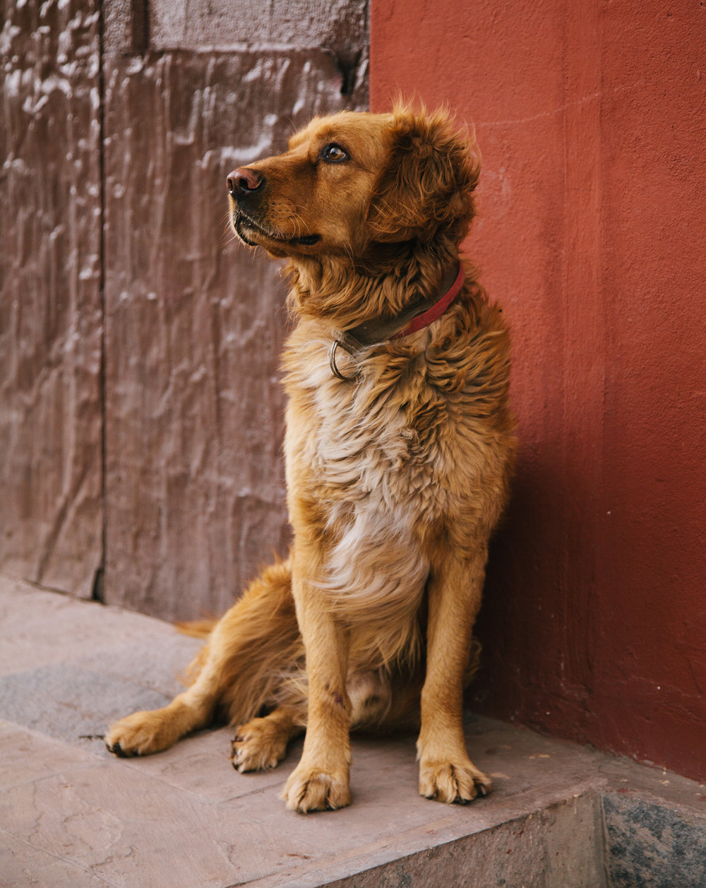 T&L_Cusco_Dog_IMG_0382.jpg
