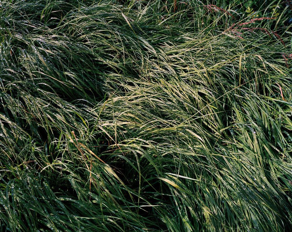ITW_M_Grass 001.jpg