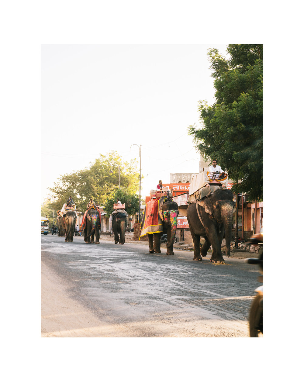 5113_Elephants.jpg