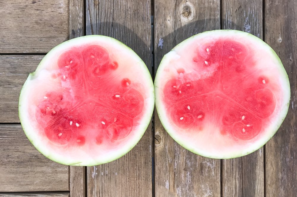5 Signs You're Addicted to Watermelon - A very disappointing watermelon.