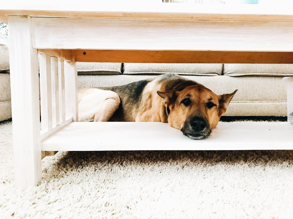 11 Gift Ideas For Dog And Pet Owners