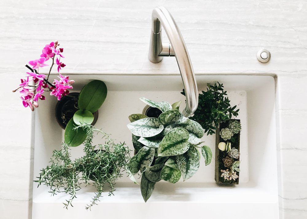 How To Decorate Open Kitchen Shelving. Decorating your kitchen with plants and herbs.