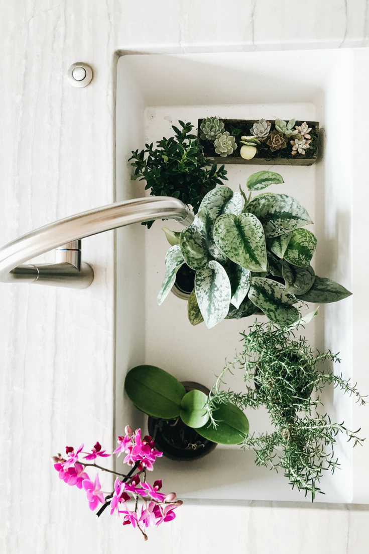 How To Decorate Open Kitchen Shelving With Green Plants. Using plants and fresh herbs in your kitchen.