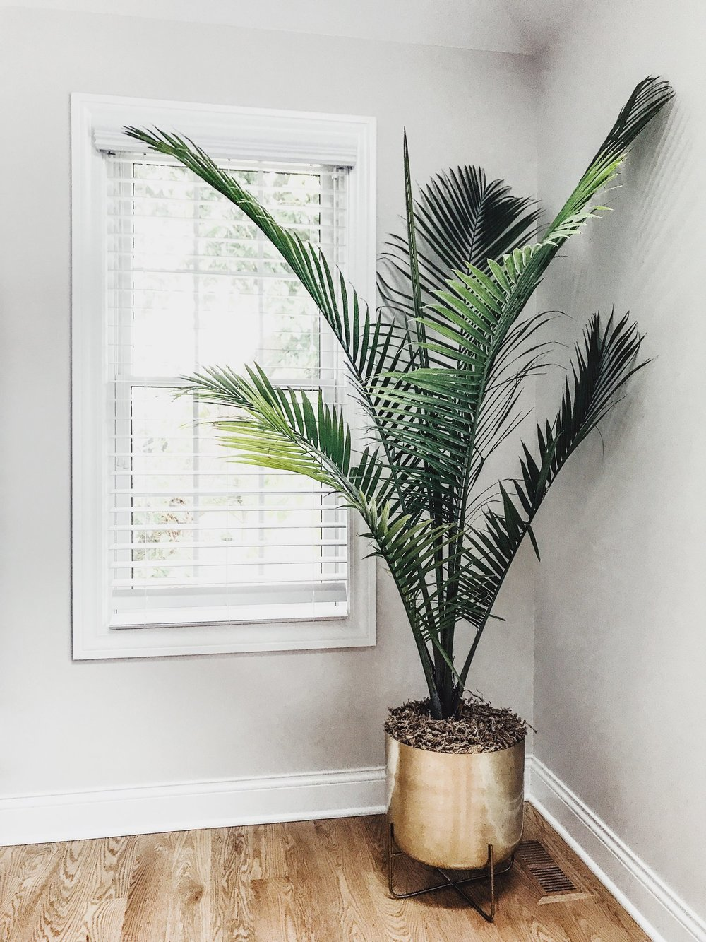 Best Indoor Planters And Herb Garden Ideas. Decorative Indoor Statement Planters And Gardens For Your Home. Gold floor planter for palm tree. West Elm metallic floor planter. #indoor #planters # palm #tree