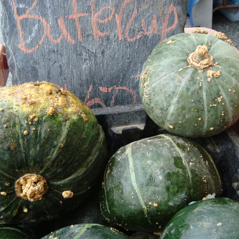 squash_buttercup.JPG