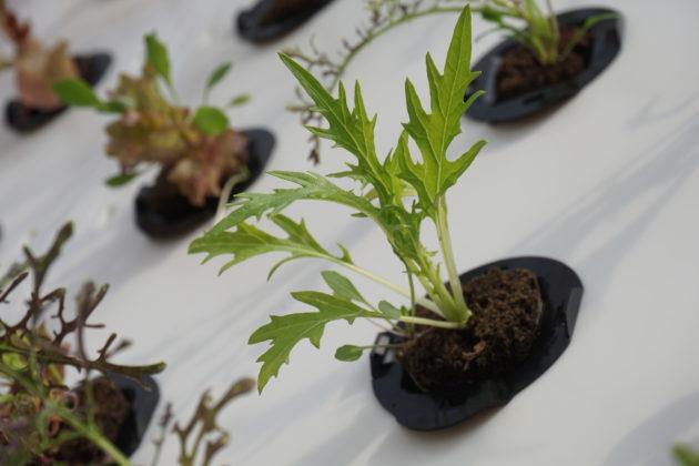 Urban Seed Inc.