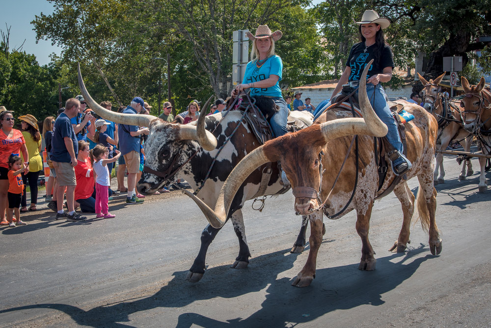 Women continue to be a significant force in both ranch and professional rodeos. Many women wranglers have regular jobs —nurses, accountants, entrepreneurs — in addition to cattle responsibilities. Here, these women lead a section of Bandera's cattle parade, a popular event held every Labor Day weekend. Bandera 2017.