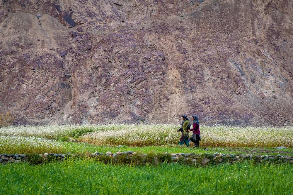 Ladakh11.jpg