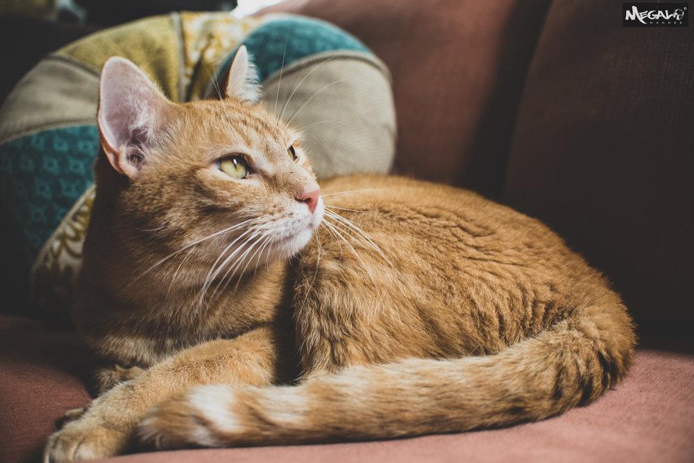 Cats-7402.jpg