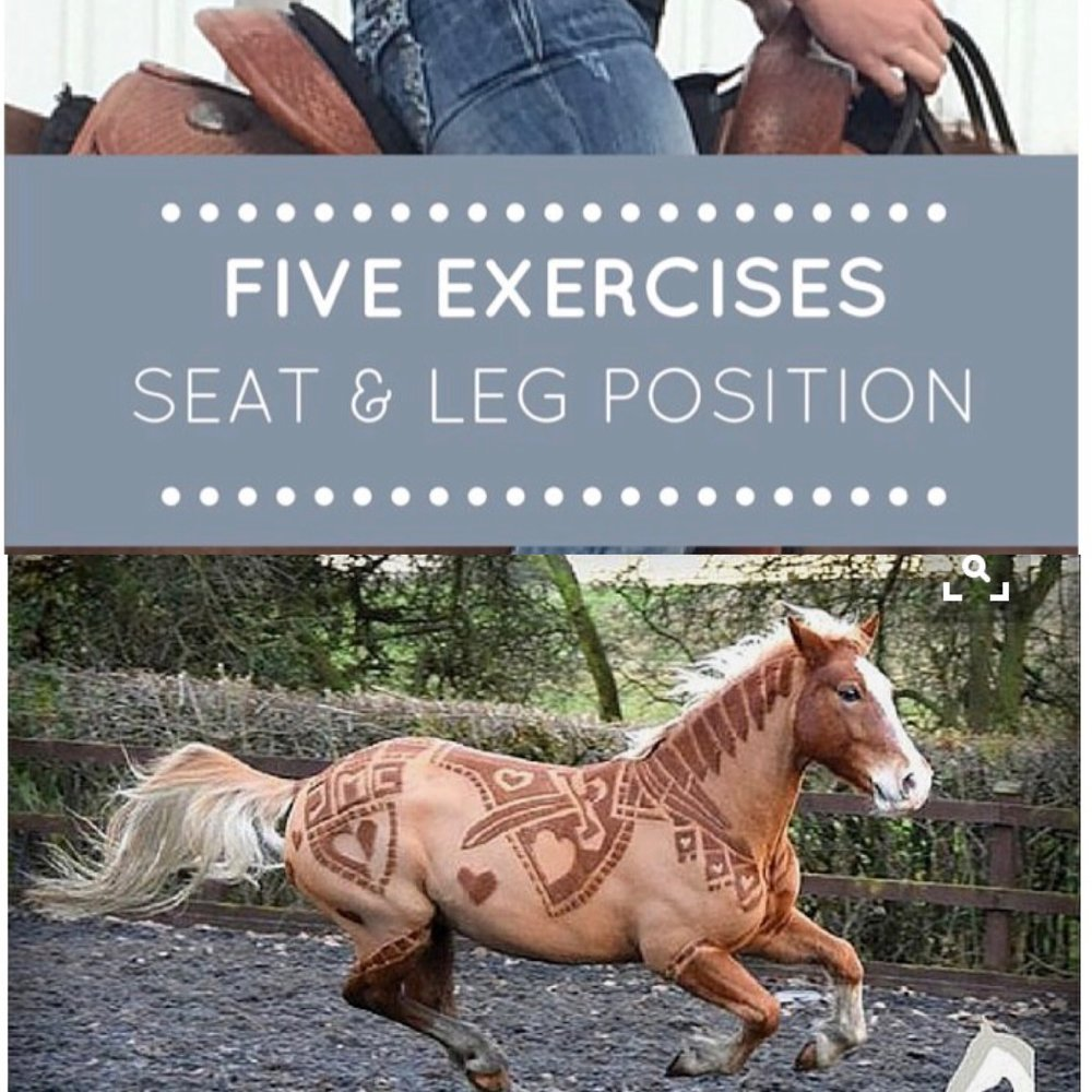 TBL HORSE GROOMING AND TRAINING TECHNIQUES ON PINTEREST