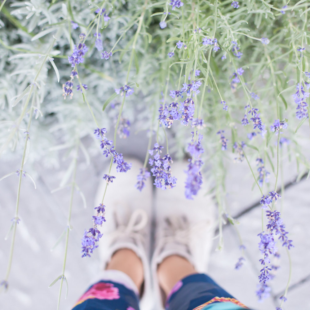lavender-and-business-lessons