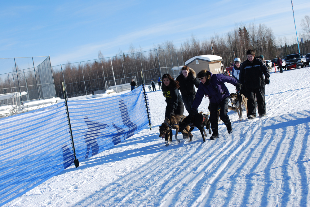 Dog handling is one of the many skills the youth learn in the Huslia's dog mushing program. Jazmine Vent is about to race in the four dog classic in the Junior North American Sled Dog Race in North Pole, 2013. Left-right: Courtney Agnes, Shay Attla, Kathy Turco, Jazmine Vent (behind the sled) and Thomas Henry. Photo by Angela Gonzalez