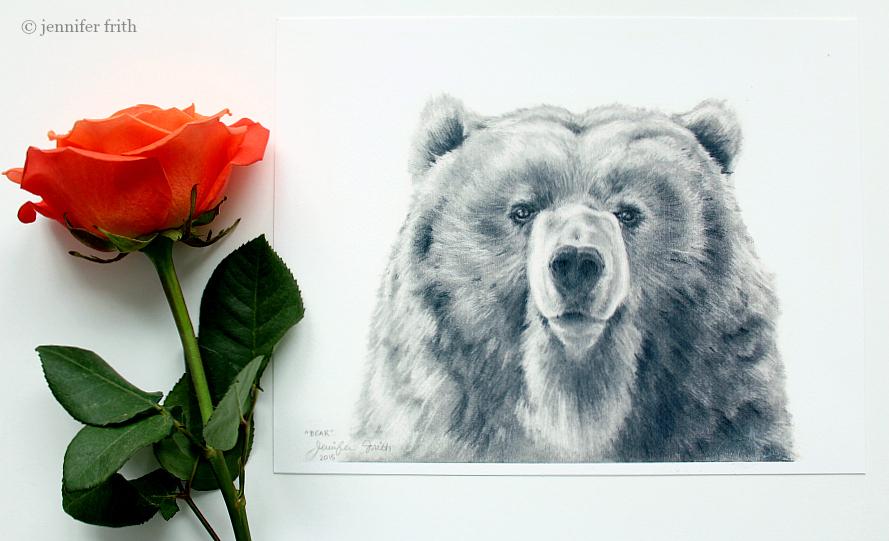 pencil Bear portrait, animal artist