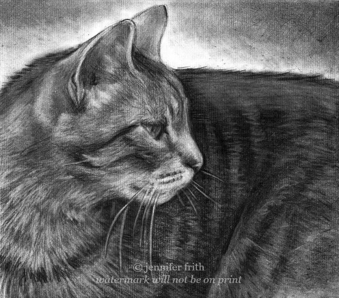 pencil cat portrait, animal artist