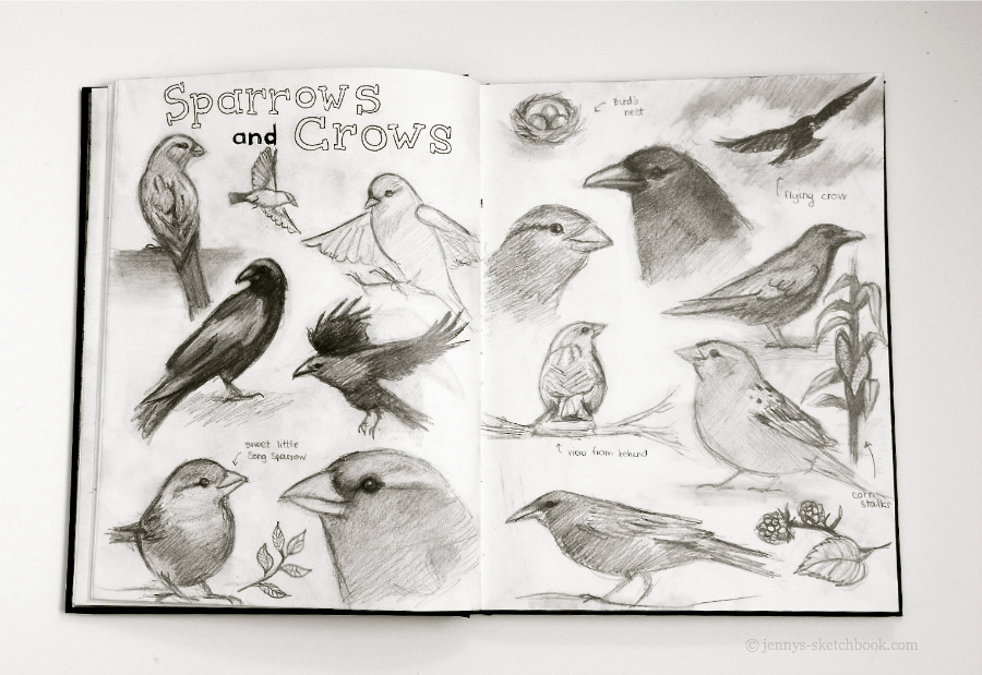jennifer frith sketchbook birds