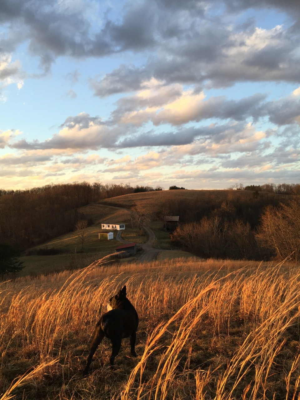 A shot of windswept landscape where Julie lives in southern Ohio. Photo courtesy of Julie Zickefoose.
