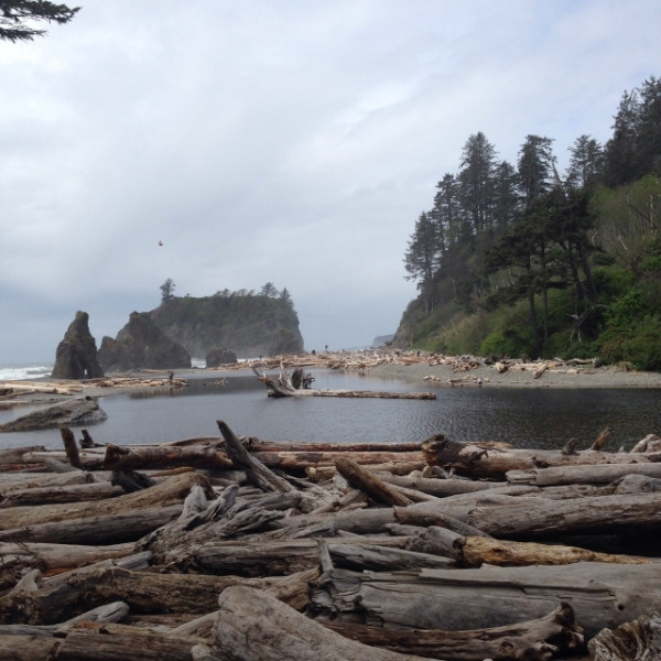 Ruby Beach driftwood expanse